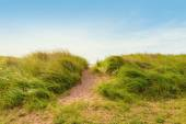 Sand path over dunes with beach grass — Stock Photo