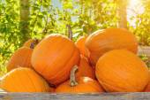 Pumpkins in a wooden box — Stock Photo