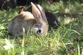 Two rabbits  — Stock Photo