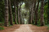 Path in forest. Somewhere in Croatia — Stock Photo