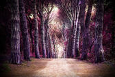 Path in forest. Somewhere in magic wood — Stock Photo