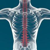 Human spine X-ray — Stock Photo