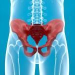 Постер, плакат: Human pelvis X ray