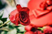 Valentine: Close Up On Single Rose With Candy And Champagne Behi — Stock fotografie