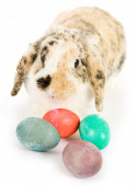 Easter: Easter Bunny With Colorful Easter Eggs — Stock fotografie