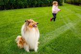 Niña jugando con un perro collie dog. — Foto de Stock