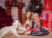 Two little girls with husky dog — Stock Photo