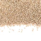 Sunflower seeds composition — 图库照片