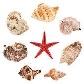 Várias conchas do mar — Fotografia Stock