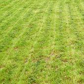 Fresh grass lawn — Stock Photo