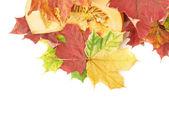 Pumpkin in maple leaves — Stock Photo