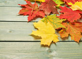 Maple leaves over the wooden boards — Stock Photo