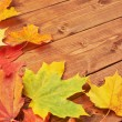 Maple leaves over the wooden boards — Stock Photo #62194517