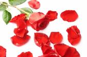 Red rose composition — Stock Photo