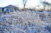 Frosted wild plants against the landscape — Stock Photo