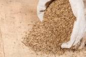 Oat grains in sack bag — Stock Photo