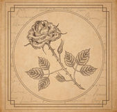 Vintage old paper background with engraved rose — Stock Vector