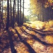 Sunrise in autumn forest — Stock Photo #56910499