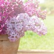 Ceramic pot with lilac flowers — Stock Photo #74483069