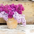 Ceramic pot with lilac flowers — Stock Photo #74483585