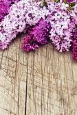 Bellissimi fiori lilla — Foto Stock