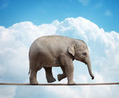 Elephant calf on tightrope — Stock Photo