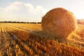 Hay bales in golden field — Stock Photo