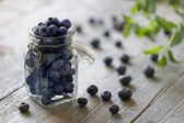 Blueberry antioxidant organic  in a jar — Stock Photo