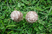 Little mushrooms on green grass — Stock Photo