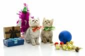 Cute tabby kitten with present — Stock Photo