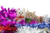 Roztomilý tříbarevné kotě sedící v barevné tinse — Stock fotografie