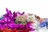 Cute tabby kitten sitting in colorful tinse — Stock Photo
