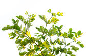 Närbild på gröna blad — Stockfoto