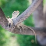 Close up chameleon — Stock Photo #74010809