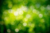 Bokeh verde — Foto Stock