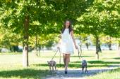 Young girl  with two greyhounds in the park — Stock Photo