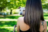 Young girl  from back side  holding greyhound — Stock Photo