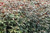 Arbustos — Fotografia Stock