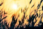 草在夕阳与老式的滤镜效果. — 图库照片