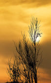 Dry twigs and sunset — Stock Photo