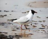 Seagull on the beach — Stock Photo