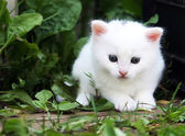 Fluffy white kitten — Stock Photo