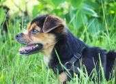Small dog in green grass — Stock Photo