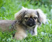 Funny dog outdoors — Stock Photo