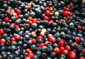 Ripe Blackberry harvest — Foto de Stock