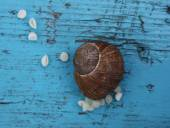 Snail laying her eggs. — Stock Photo