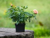 Bouquet de fleurs sur la table en bois — Photo