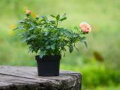Ahşap masaya çiçek buketi — Stok fotoğraf