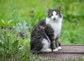 Cat is sitting in the grass — Stock Photo