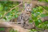 The cat climbed the tree — Stock Photo